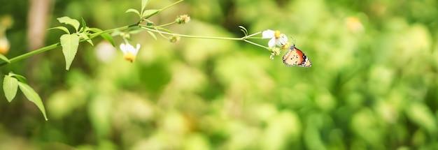 Vue de la nature du beau papillon orange sur fond flou nature verte dans le jardin.