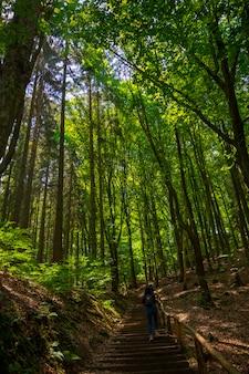 Vue de la nature du parc national de la suisse saxonne, allemagne