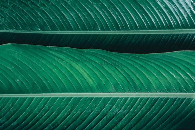 Vue sur la nature en gros plan de la feuille verte dans le jardin fond d'écran sombre concept nature background