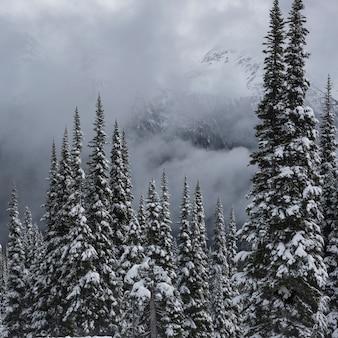 Vue, de, neige a couvert, arbres, dans, hiver, whistler, montagne, colombie britannique, canada