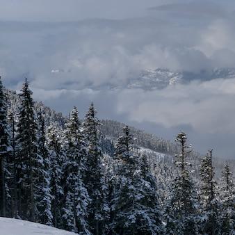 Vue, de, neige a couvert, arbres, à, montagnes, dans, hiver, whistler, montagne, colombie britannique, canada
