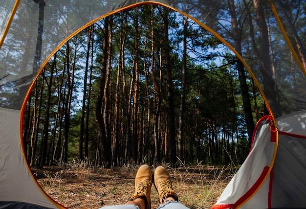 Vue de nuit de la forêt depuis la tente