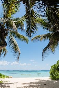 Vue sur l'océan avec des cocotiers et des bateaux