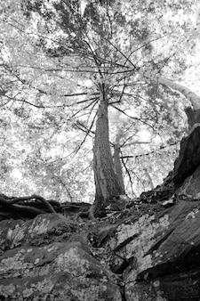 Vue d'oeil de vers noirs et blancs d'un arbre