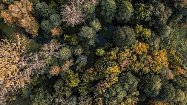 Vue d'oiseau de la forêt d'automne