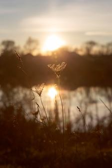 Vue paisible de la lumière du matin