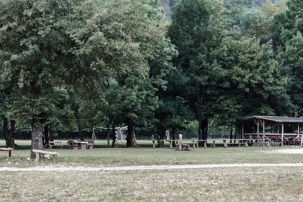 Vue panoramique sur les arbres dans le parc