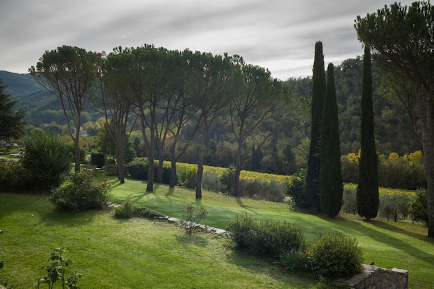 Vue panoramique des arbres qui poussent le long des terres agricoles, chianti, toscane, italie