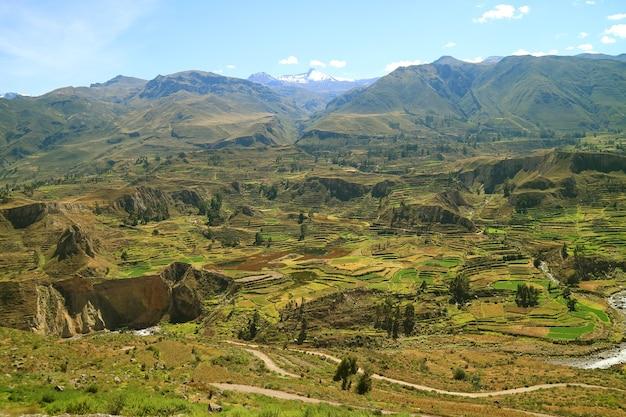 Vue panoramique de belles terrasses agricoles dans le canyon de colca, région d'arequipa, pérou