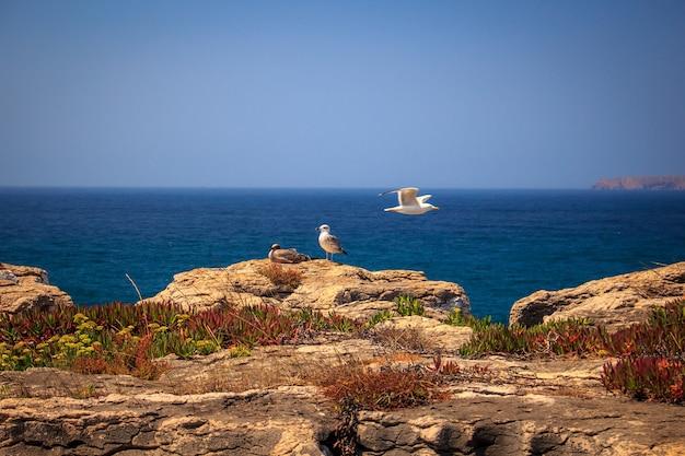 Vue panoramique du bord de mer avec des mouettes en journée ensoleillée.ville balnéaire de peniche, portugal.