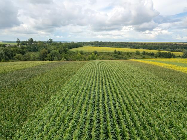 Vue panoramique du drone au-dessus du champ agricole de maïs au jour d'été contre le ciel nuageux. texture de fond de plante.