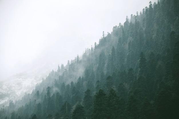 Vue panoramique du paysage sur la forêt d'hiver