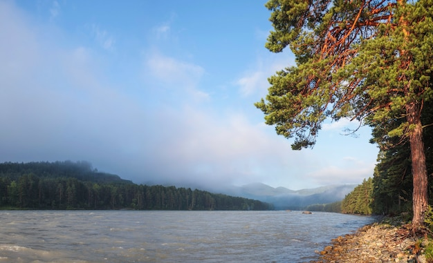 Vue panoramique, forêt de pins sur les rives de la rivière katun