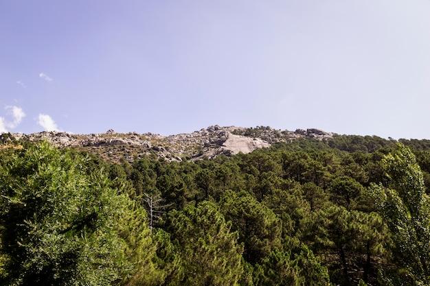Vue panoramique d'une forêt de pins verts sur le flanc d'une montagne