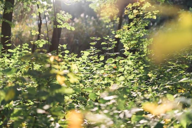 Vue panoramique en forêt