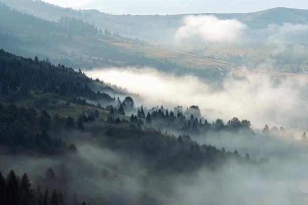 Vue panoramique sur les forêts de montagne couvertes de brouillard