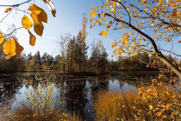 Vue panoramique sur le lac dans la forêt jaune en automne.