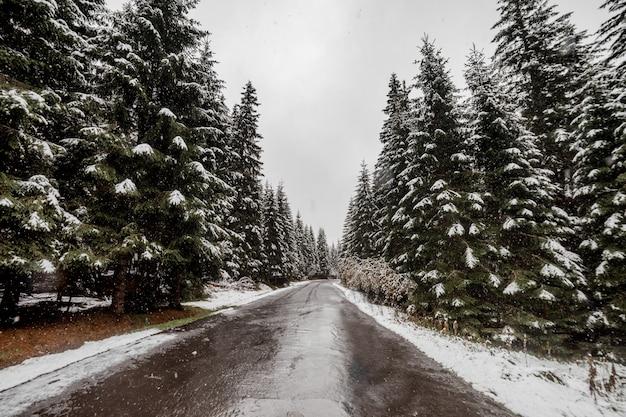 Vue panoramique sur la route avec la neige et la montagne et fond d'arbres géants en saison d'hiver. morske oko