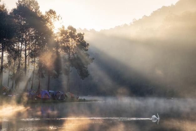 Vue panoramique des touristes de la forêt de pins camping avec cygne sur réservoir au matin, pang oung, mae hong son, thaïlande