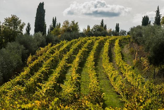 Vue panoramique, de, vignoble, gaiole, dans, chianti, toscane, italie