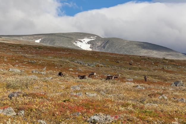 Vue sur le parc national de sarek à l'automne, en suède, mise au point sélective