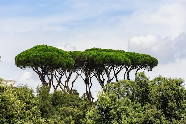 Vue Sur Le Parc De Rome Avec Des Pins Parasols Typiques Photo Premium