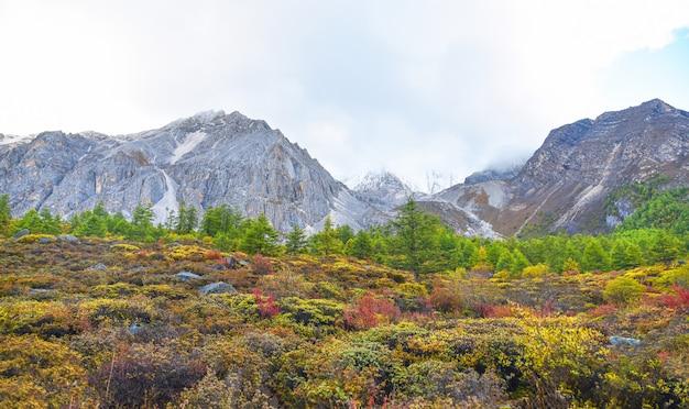 Vue de paysage dans la réserve nationale de yading