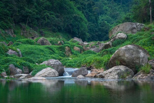 La vue de paysage de forêt tropicale humide, thaïlande