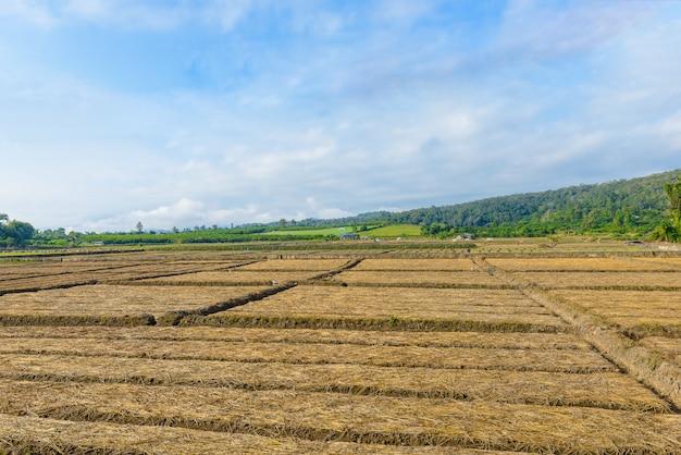 Vue de paysage d'un légume d'agriculture fraîchement croissant