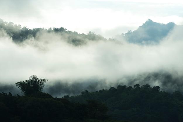 Vue de paysage de nature de la forêt tropicale humide, parc national de khao yai, thaïlande