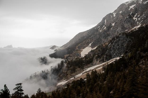 Vue des pentes de la montagne avec une forêt