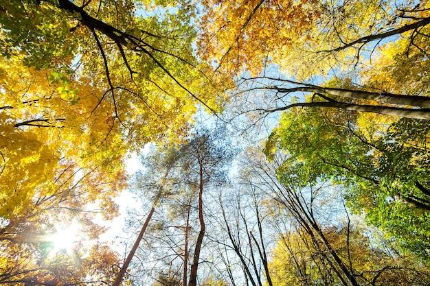 Vue en perspective de la forêt d'automne avec des feuilles orange et jaune vif