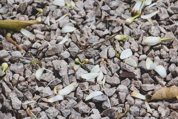 Vue des pierres avec des pétales