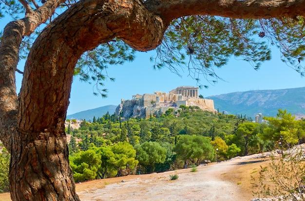 Vue pittoresque d'athènes avec l'acropole et le vieux pin dans le parc, grèce - paysage grec