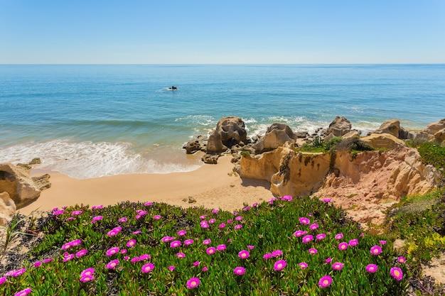 Vue sur la plage depuis les meilleures fleurs de printemps. albufeira portugal.