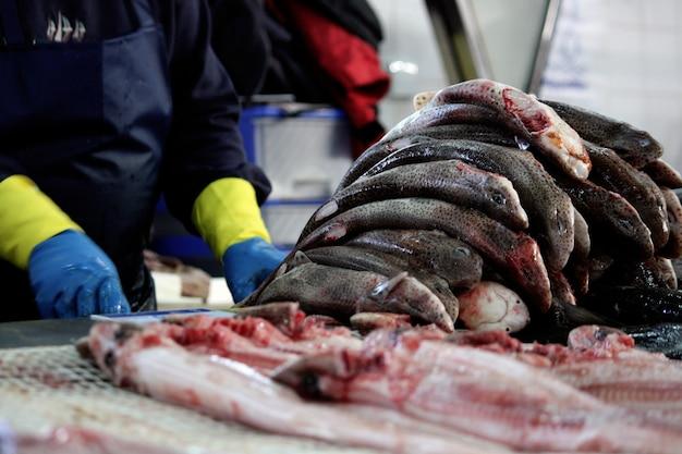 Vue de plusieurs requins catshark dépouillé de la chair au marché.