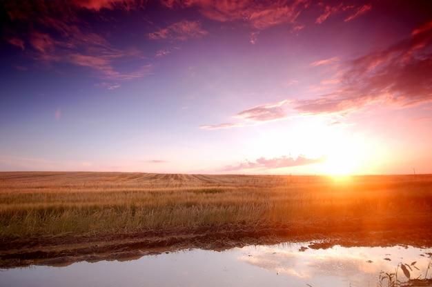 Vue de prairie au coucher du soleil