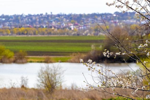 Vue de printemps avec un arbre en fleurs au bord de la rivière