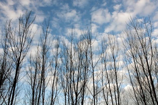 Vue de quelques branches d'arbres sans feuilles en automne.