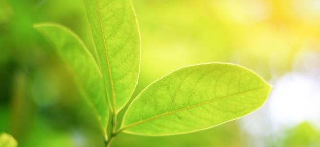 Une vue rapprochée de 3 feuilles en été avec la lumière du soleil