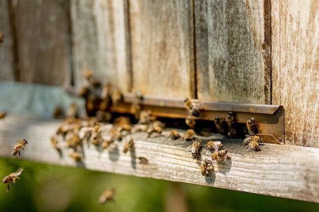 Vue rapprochée des abeilles qui apportent du pollen de fleurs à la ruche sur ses pattes. le miel est un produit apicole. le miel d'abeille est récolté dans de magnifiques nids d'abeilles jaunes.