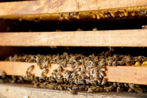 Vue rapprochée des abeilles qui travaillent