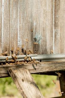 Une vue rapprochée des abeilles de travail apportant du pollen de fleurs à la ruche sur ses pattes.