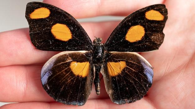 Vue rapprochée du beau concept de papillon