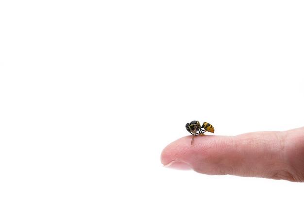 Vue rapprochée du doigt de l'homme piqûre d'abeille isolé.