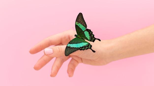 Vue rapprochée du papillon assis sur place