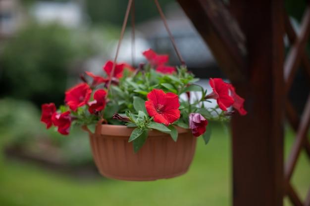 Vue rapprochée du pot de jardinière suspendu attrayant avec pétunia en fleurs dans le patio, véranda, fleurs en plein air, jardinage, style de vie de maison de campagne, été, jardin, revenu, concept de réussite