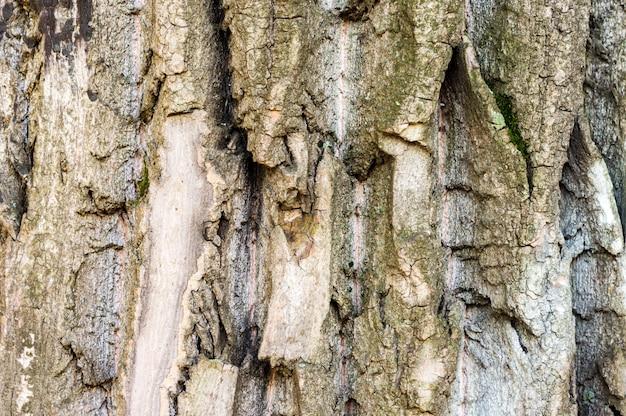 Vue rapprochée du tronc d'arbre