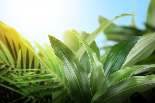 Vue rapprochée de la feuille tropicale verte
