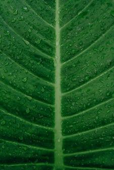 Vue rapprochée de la feuille verte dans le jardin fond d'écran sombre concept nature background feuille tropicale